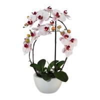 Gasper rosa Orchideen Keramikschale 52cm