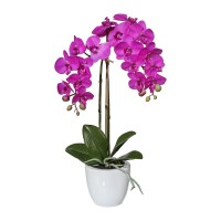 Gasper Mini_Phalaenopsis pink 43cm