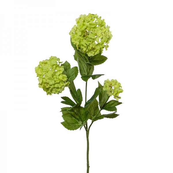 Gasper Schneeballzweig grün