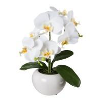 Gasper Phalaenopsis weiß 35cm im Topf