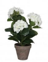 Mica Hortensie weiß 40cm