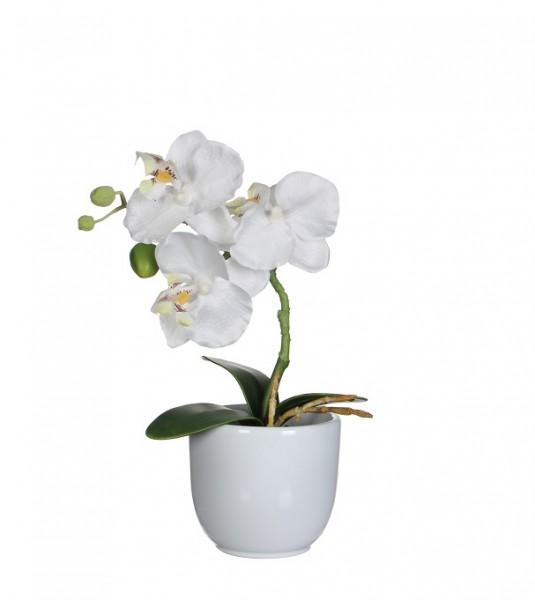 Phalaenopsis weiß 26cm