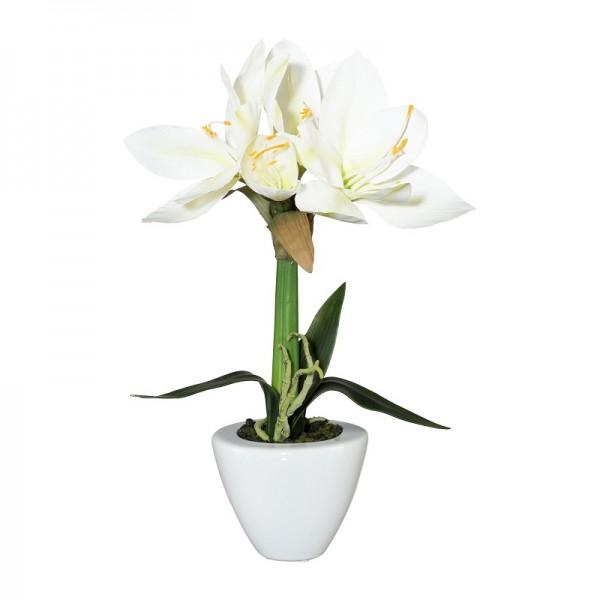 Gasper Amaryllis Topf weiß 37cm