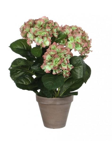 Mica Hortensie grün 40cm