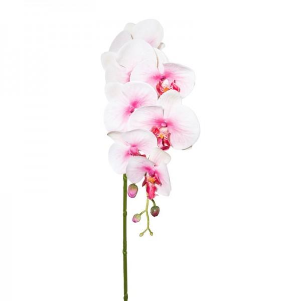 Gasper Phalaenopsis hellrosa 87cm