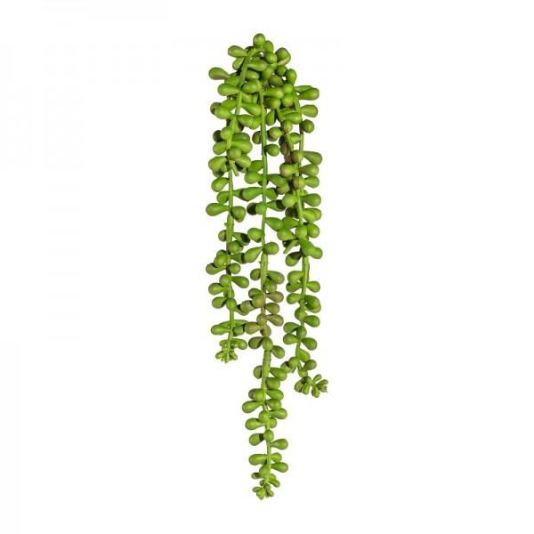 Sedum hängend 30cm
