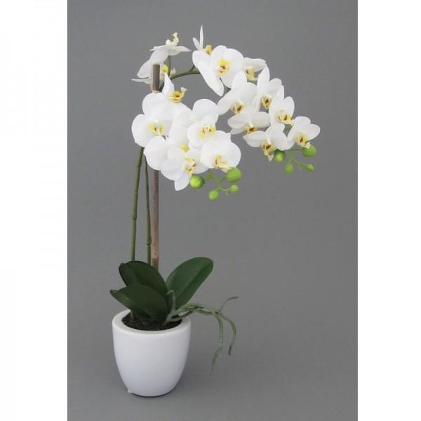 Gasper Mini-Phalaenopsis weiß 43cm