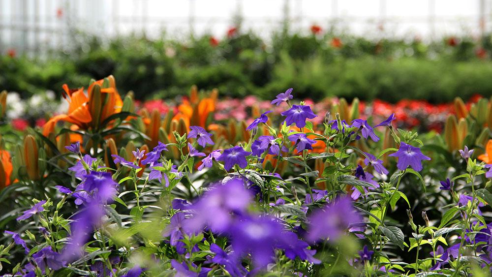 Pflanzen (Baumschule, Beet & Balkon, Stauden, Zimmerpflanzen)