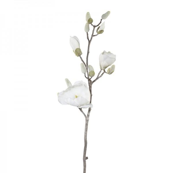 Gasper Magnolienzweig geeist
