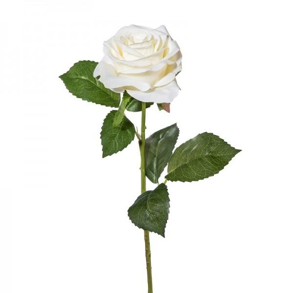 Gasper Rose weiß