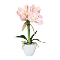 Gasper Amaryllis rosa Topf 37cm