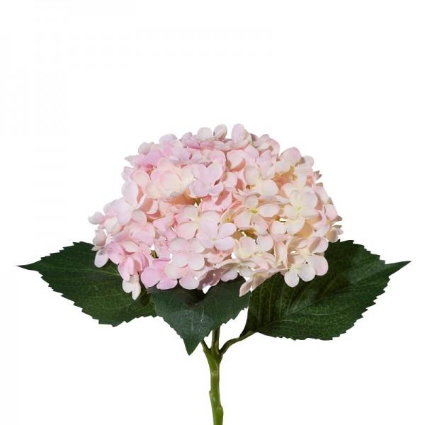 Gasper Hortensie rosa