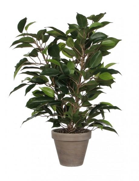 Mica Ficus Natasja 40cm