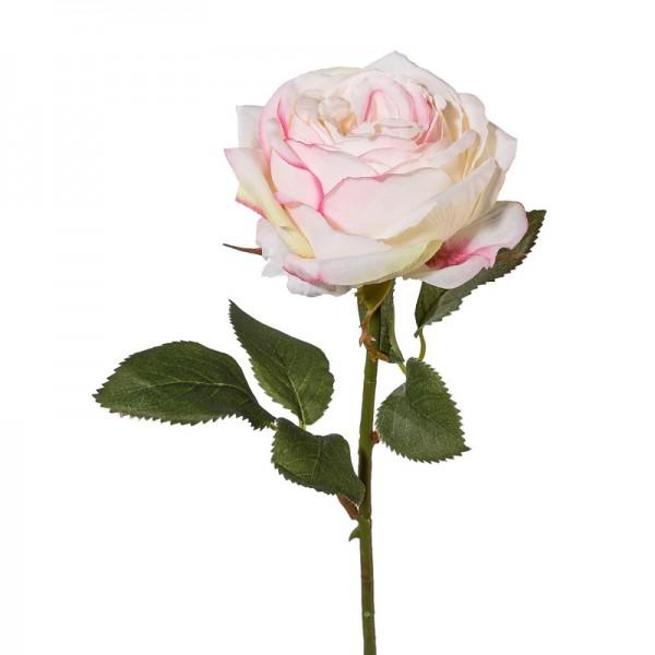 Gasper Rose creme rosa