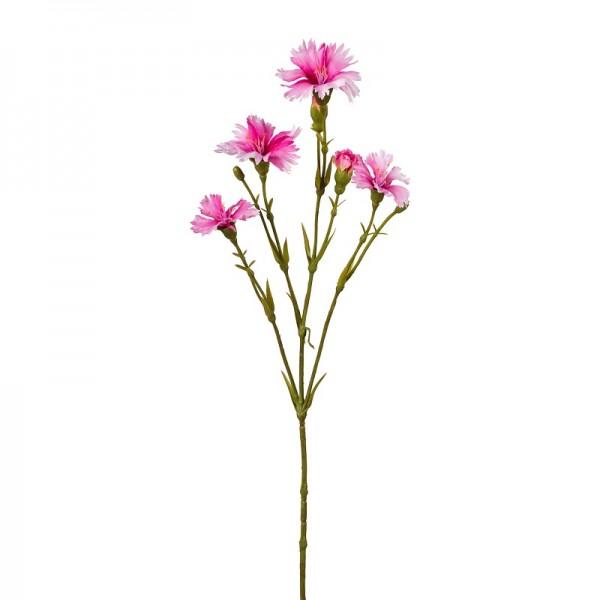 Gasper Lichtnelkenzweig rosa