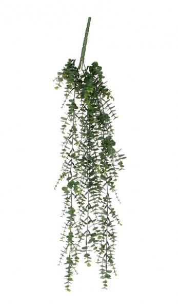 Mica Eucalyptus hängend 65cm